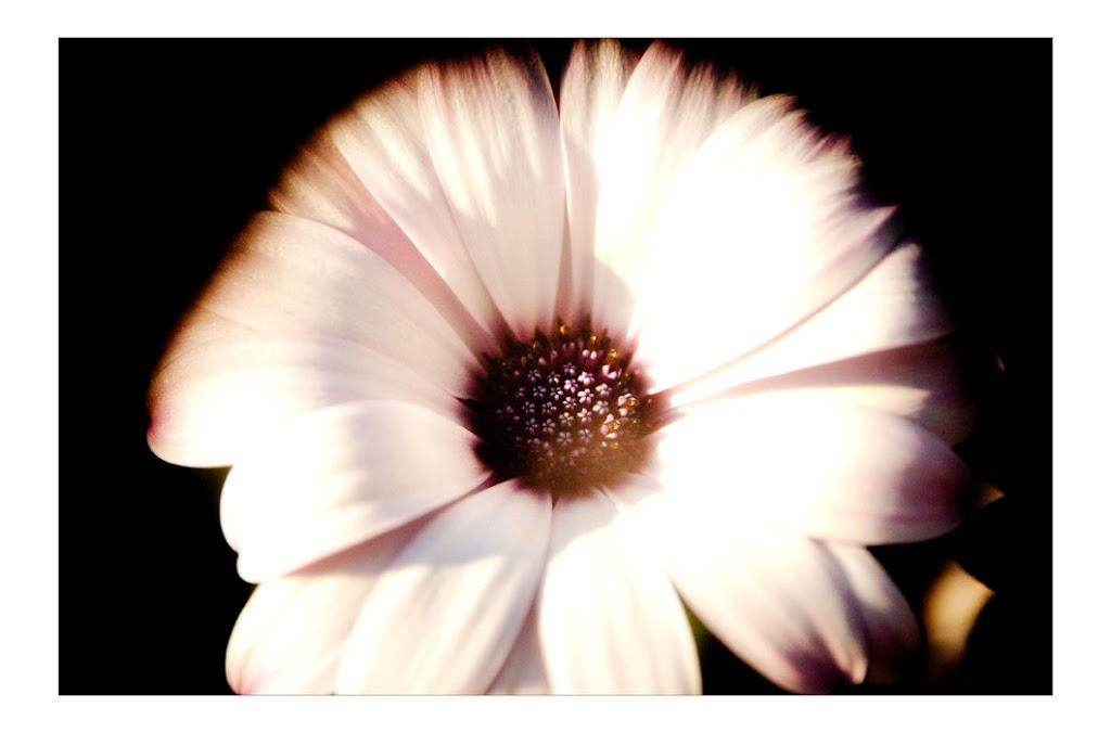 Closeup of a Flower blossom