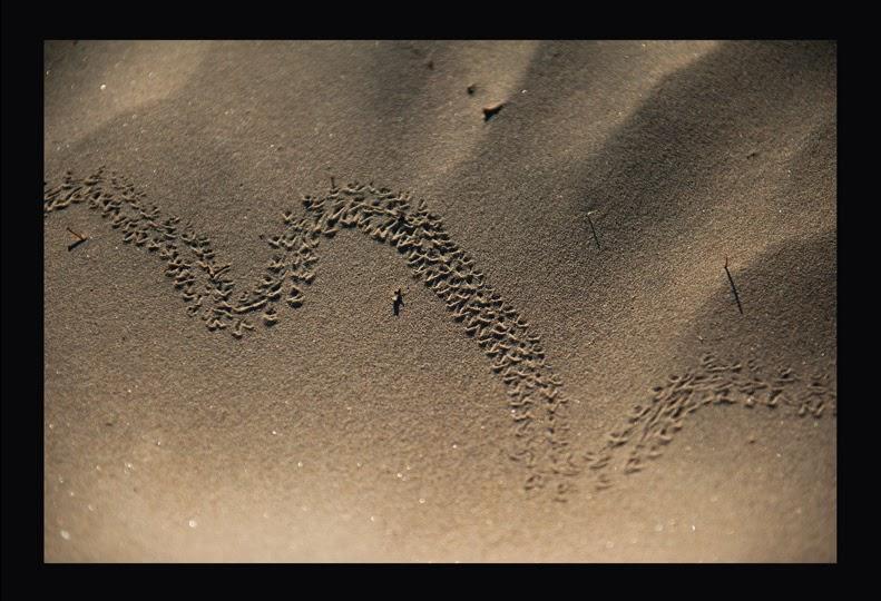 Tracks06web